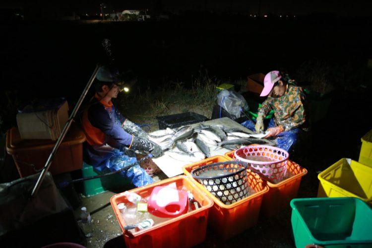 『 鄉土特輯 』台南早餐/天天有新鮮的魚上桌,台南養殖漁業『虱目魚收成』